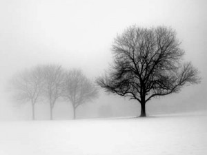 Winter-Trees-I-by-Ilona-Wellmann-AB4936